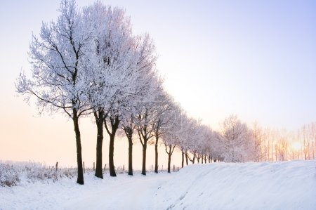 Row of winter trees with pale sunset